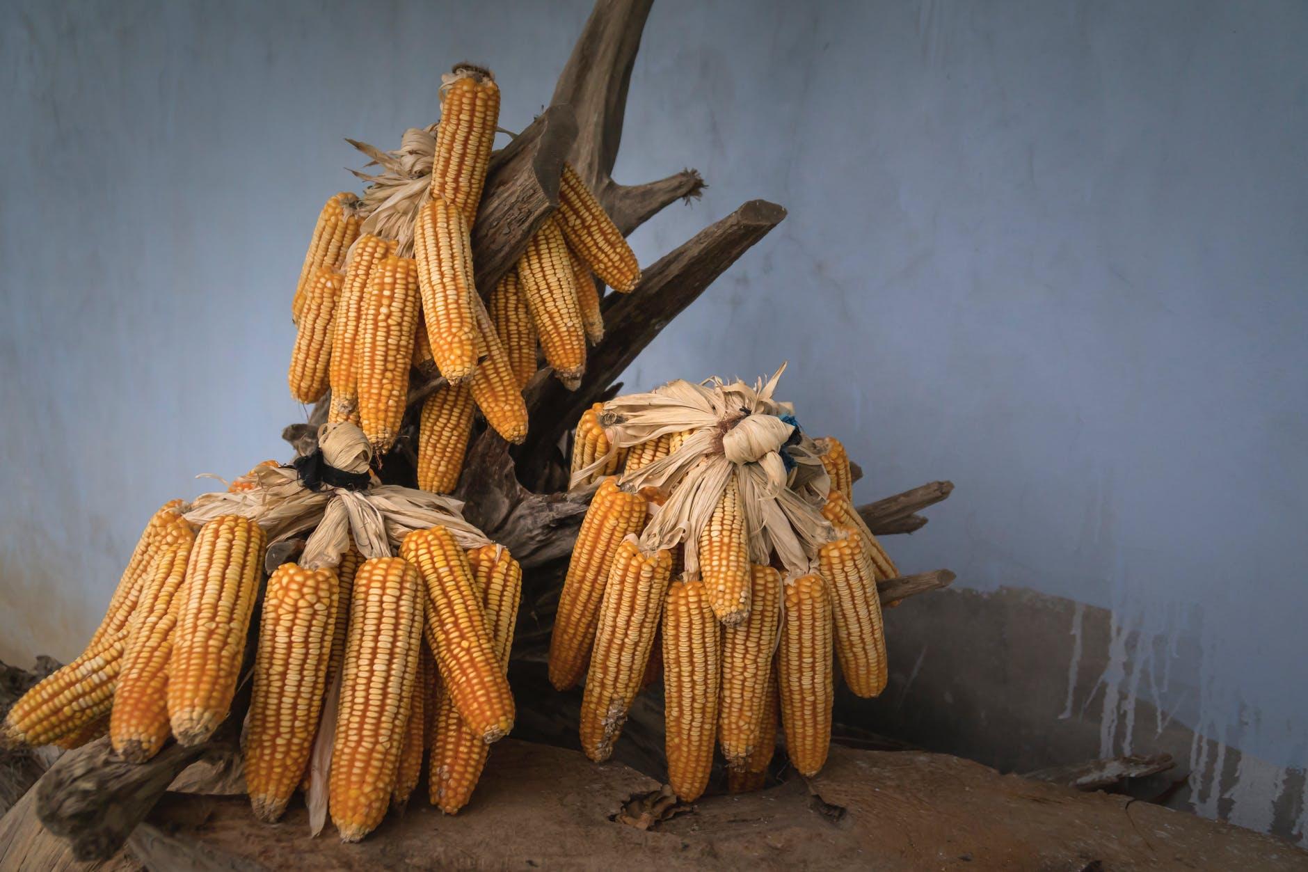 bunch of corns